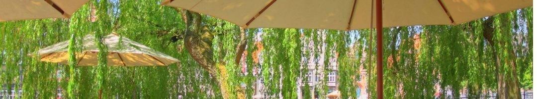 Sonnenschirme unter Bäume